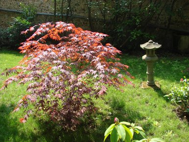 Arbuste rouge