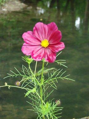 fleur le long des douves