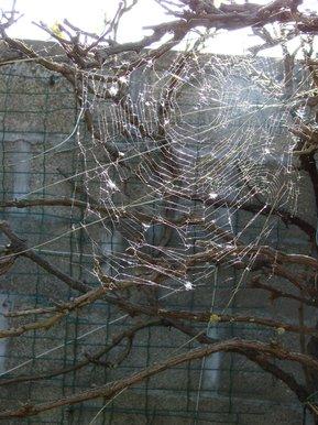 toile d\'araignée