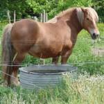 cheval-brun