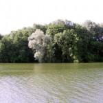 arbres-le-long-du-fleuve