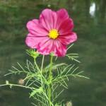 fleur-le-long-des-douves