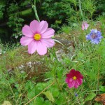 quelques-fleurs