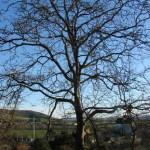arbre-decoupe