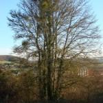 arbre-devant-la-vallee