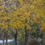 arbres-1