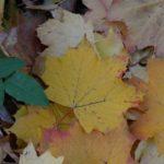 feuilles-1