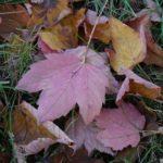 feuilles-3